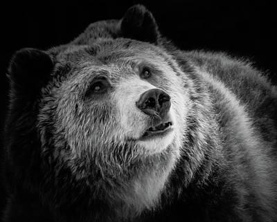 Photograph - Grizzly Close Up Bw II by Athena Mckinzie
