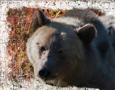 Digital Art - Grizzly Closeup  by Rusty R Smith