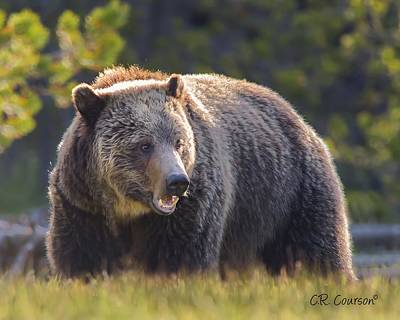 Photograph - Grizzly by CR  Courson