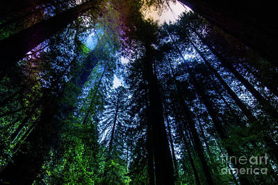 Photograph - Grizzly Creek Redwood Grove by Blake Webster