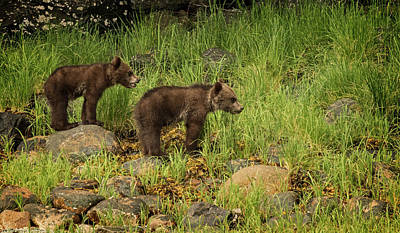 Photograph - Grizzly Cubs by Inge Riis McDonald
