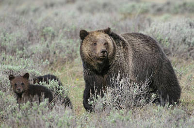 Grizzly Family Art Print