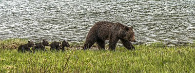 Art Print featuring the photograph Grizzly Family by Yeates Photography