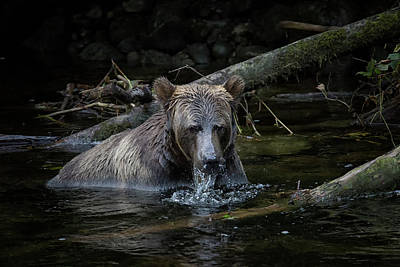 Photograph - Grizzly Fishing by Randy Hall