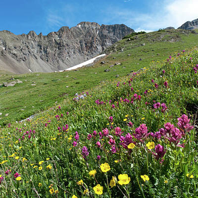 Photograph - Grizzly Gulch Alpine Wildflower Landscape by Cascade Colors