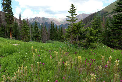 Widflower Photograph - Grizzly Gulch Summer Green by Cascade Colors