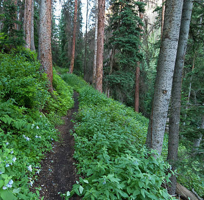 Photograph - Cataract Gulch Summer Trail Through The Forest by Cascade Colors