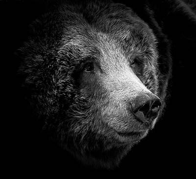 Photograph - Grizzly Heart by Athena Mckinzie