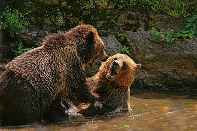 Photograph - Grizzly Horseplay by Allen Beatty