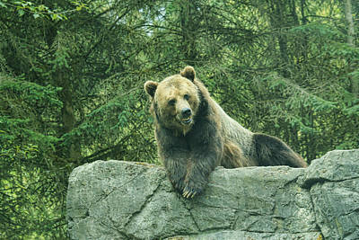 Photograph - Grizzly Lounge by Steve McKinzie