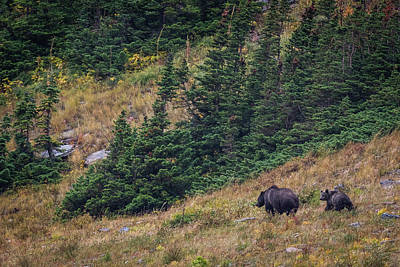 Best Photograph - Grizzly Mountain by Gary Migues
