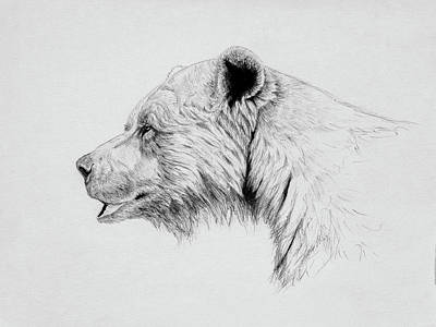 Brown Bear Drawing - Grizzly by Norman Rawn