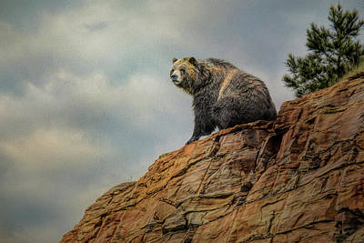 Photograph - Grizzly On Top Of The World by Jai Johnson