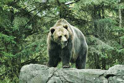 Photograph - Grizzly Overlook by Steve McKinzie