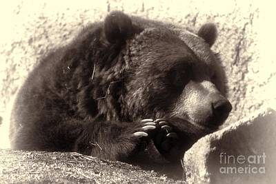 Photograph - Grizzly Portrait by Erica Hanel