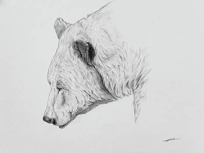 Brown Bear Drawing - Grizzly Portrait Sketch by Norman Rawn
