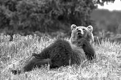 Photograph - Grizzly Relaxing At Banff Black And White by Adam Jewell