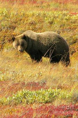Photograph - Grizzly Stare by Frank Townsley
