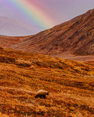 Photograph - Grizzly Under The Rainbow by Jeff Folger
