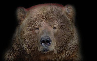 Photograph - Grizzly1 by Marilyn Wilson