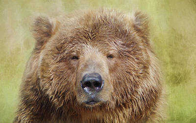 Photograph - Grizzly3 by Marilyn Wilson