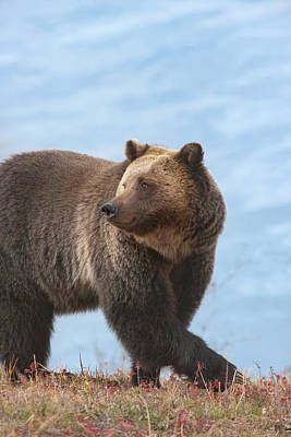 Photograph - Grizzly's Attention by Mark Miller