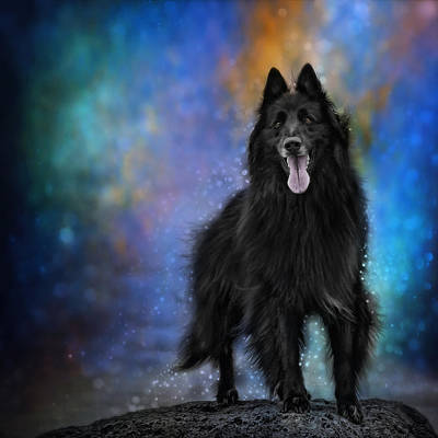 Belgian Sheepdog Photograph - Belgian Sheepdog Artwork 4 by Wolf Shadow  Photography