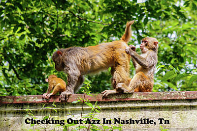 Photograph - Grooming In Nashville by Robert Hebert