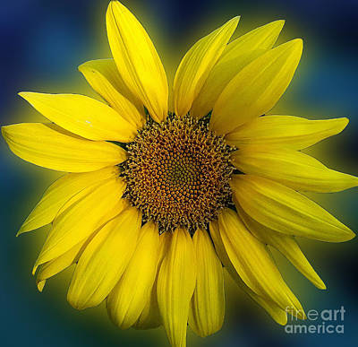 Photograph - Groovy Sunflower by Jeanne Forsythe