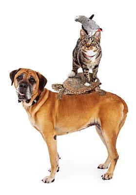 Mastiff Pup Photograph - Grop Of Pets Stacked Up by Susan Schmitz