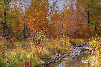Photograph - Gros Ventre Area by Lynn Sprowl