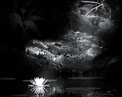 Grotto Of The Swamp Gator Art Print