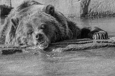 Photograph - Grouchy Bear - Black And White by Susan McMenamin