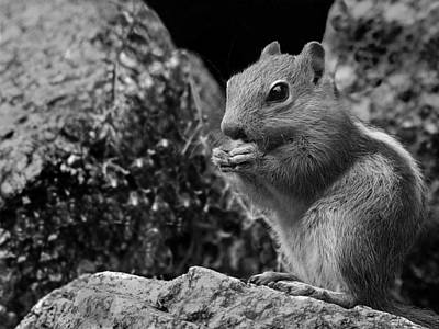 Art Print featuring the photograph Ground Squirrel  by Christina Lihani