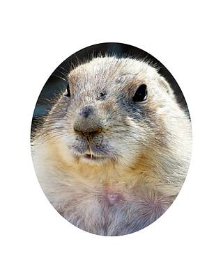 Photograph - Ground Squirrel Portrait by Laurel Powell