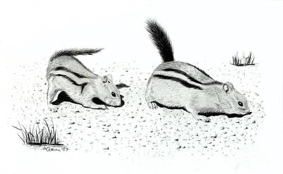 Drawing - Ground Squirrels by Lynn Quinn