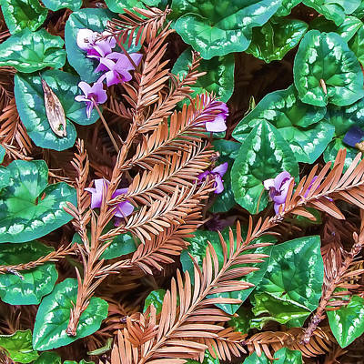 Photograph - Groundcover Colors And Patterns by Jay Blackburn