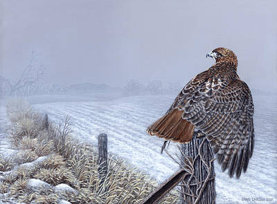 Grounded - Redtailed Hawk Original by Craig Carlson
