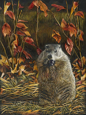 Groundhog Mixed Media - Groundhog Bulking Up For Winter by Susan Donley