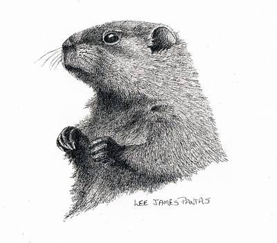 Groundhog Drawing - Groundhog Or Woodchuck by Lee Pantas
