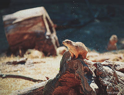 Photograph - Groundhog Watch by Anna Louise