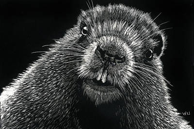 Drawing - Groundhog by William Underwood