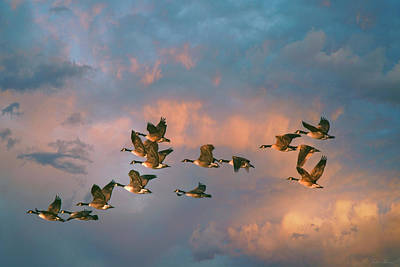 Photograph - Group Flight by John Rivera