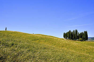 Group Of Cypresses Art Print by Juergen Feuerer