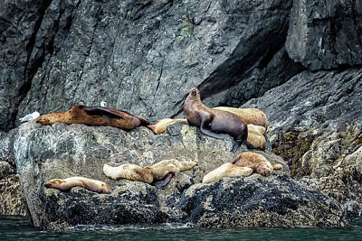 Photograph - Group Of Female Sea Lions And Young by Belinda Greb