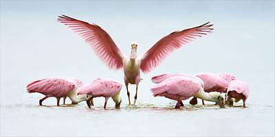 Group Of Roseate Spoonbills Original