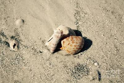 Photograph - Group Of Seashells by Danielle Groenen