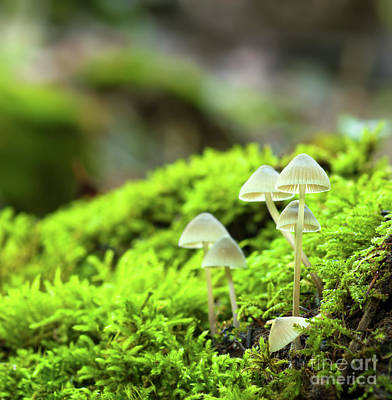 Photograph - Group Of Small Mushrooms by Gurgen Bakhshetsyan