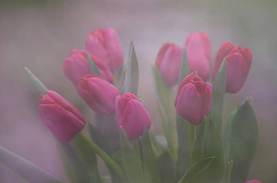 Photograph - Group Of Tulips by Ann Bridges
