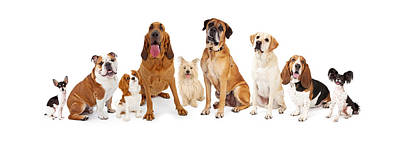 Bloodhound Photograph - Group Of Various Size Dogs by Susan Schmitz